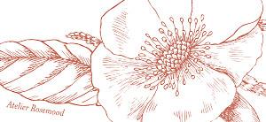 Etiquette de mariage Gravure chic corail
