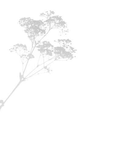 Livret de messe mariage Songe champêtre gypsophile - Page 2