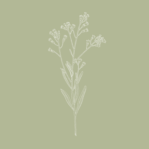 Carton d'invitation mariage Botanique vert